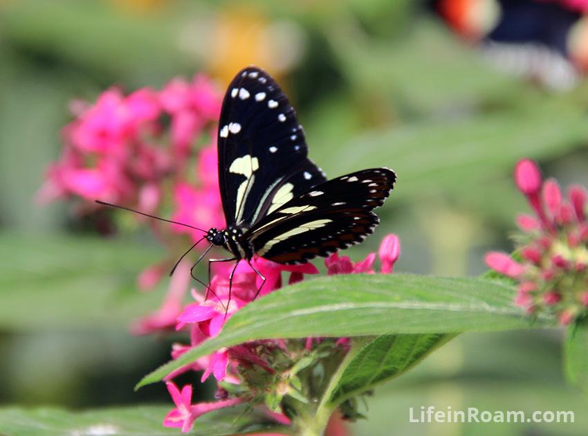 BlogMindoButterflies_002