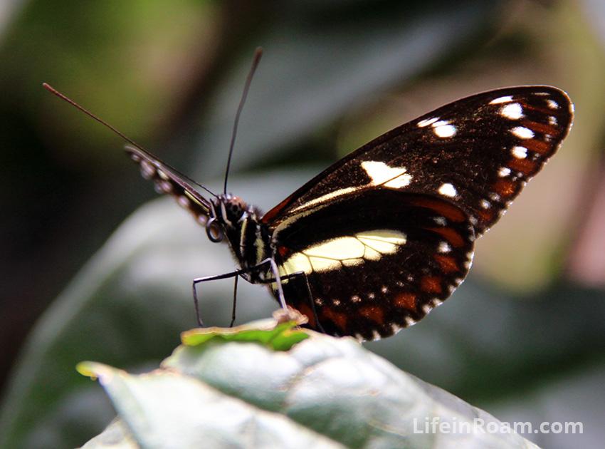 BlogMindoButterflies_013