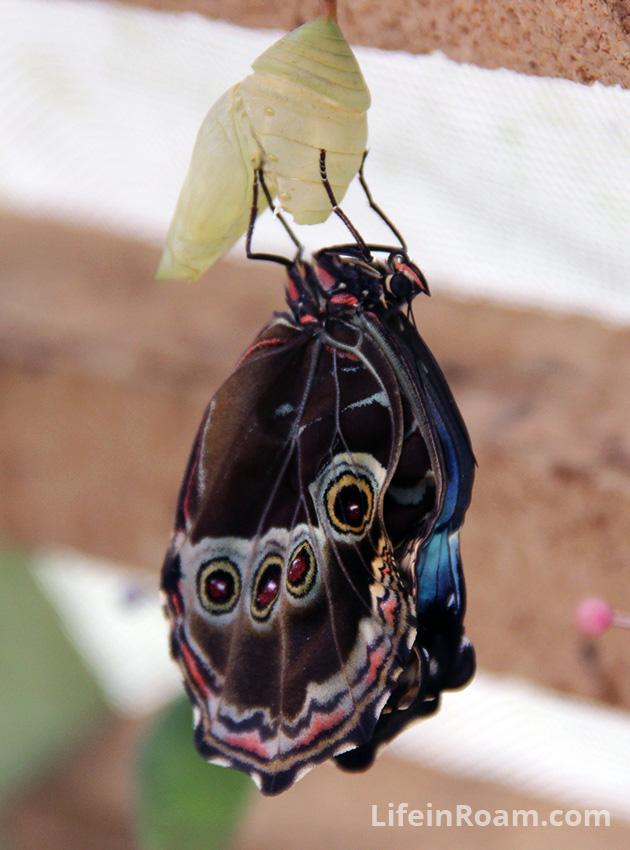 BlogMindoButterflies_047