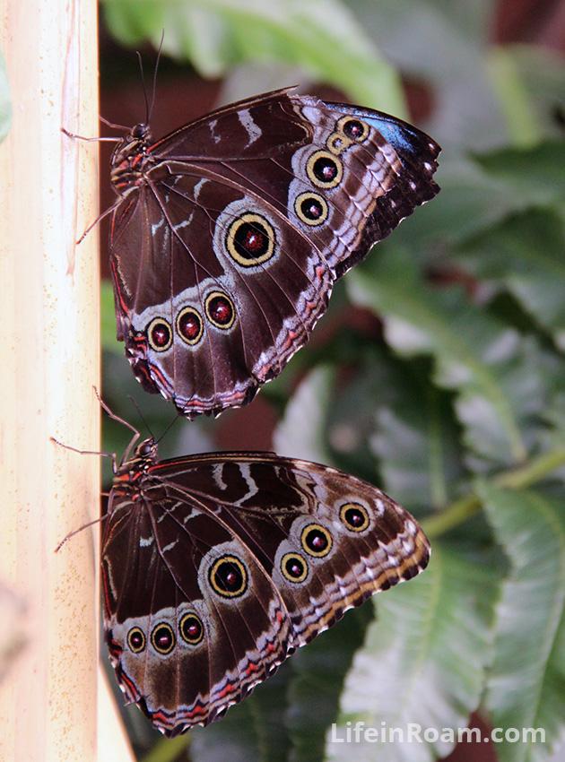 BlogMindoButterflies_069