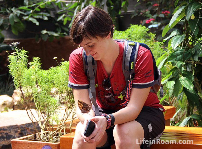 BlogMindoButterflies_098