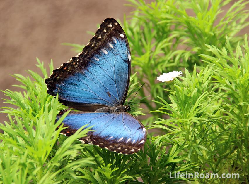 BlogMindoButterflies_102